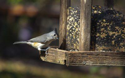 migliore mangiatoia per uccelli