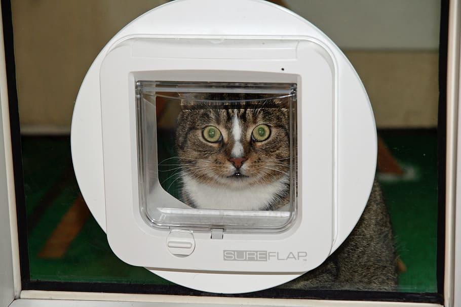 migliore porta per gatti