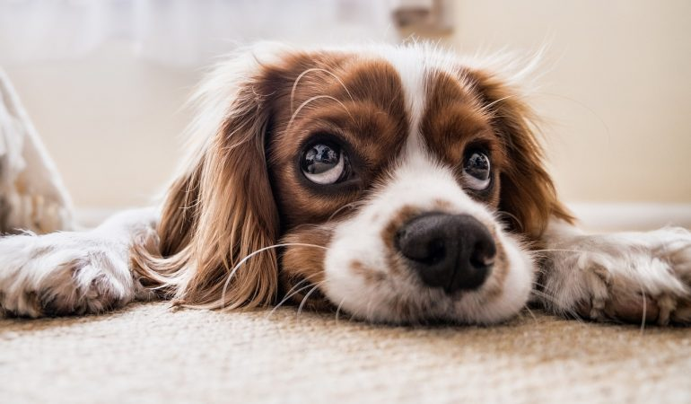 Tappeto Morbido Per Cani : I migliori tappetini refrigeranti per cani del offerte e