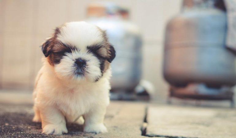 Tappeto Morbido Per Cani : I migliori tappetini igienici assorbenti per cani